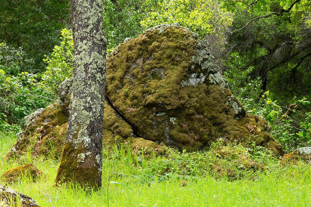 mount diablo state park pine canyon-14.jpg