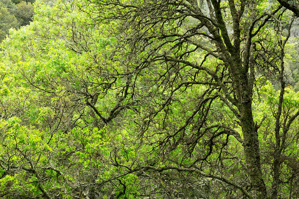 mount diablo state park pine canyon-15.jpg