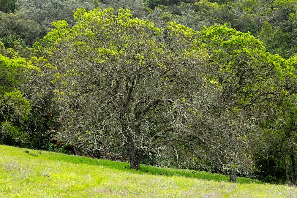 mount diablo state park pine canyon-18.jpg