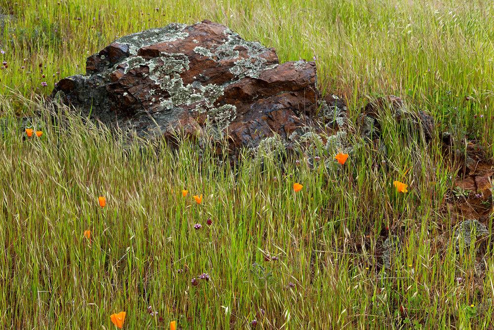 mount diablo state park pine canyon-21.jpg