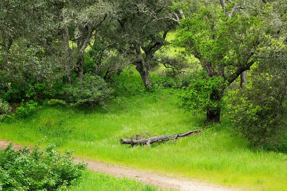 mount diablo state park pine canyon-26.jpg