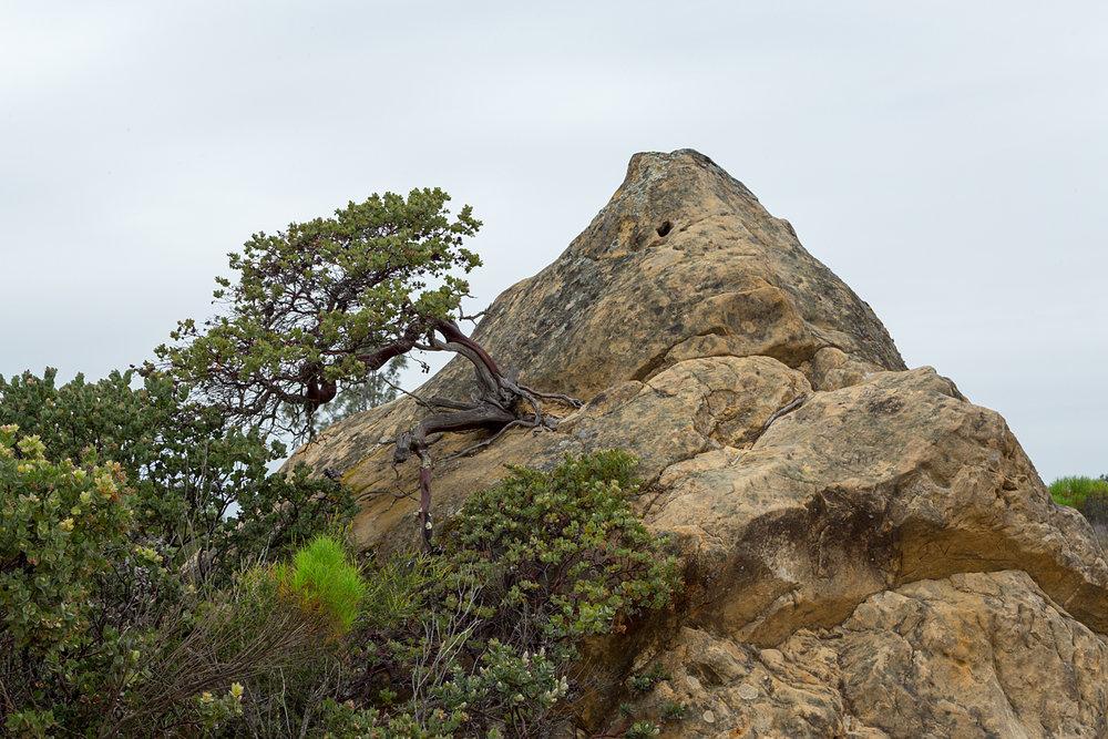 mount diablo state park pine canyon-32.jpg