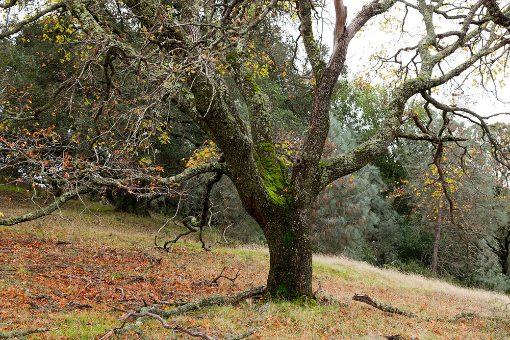 Mount Diablo State Park Curry Canyon Chase Pond Frog Pond-11.jpg
