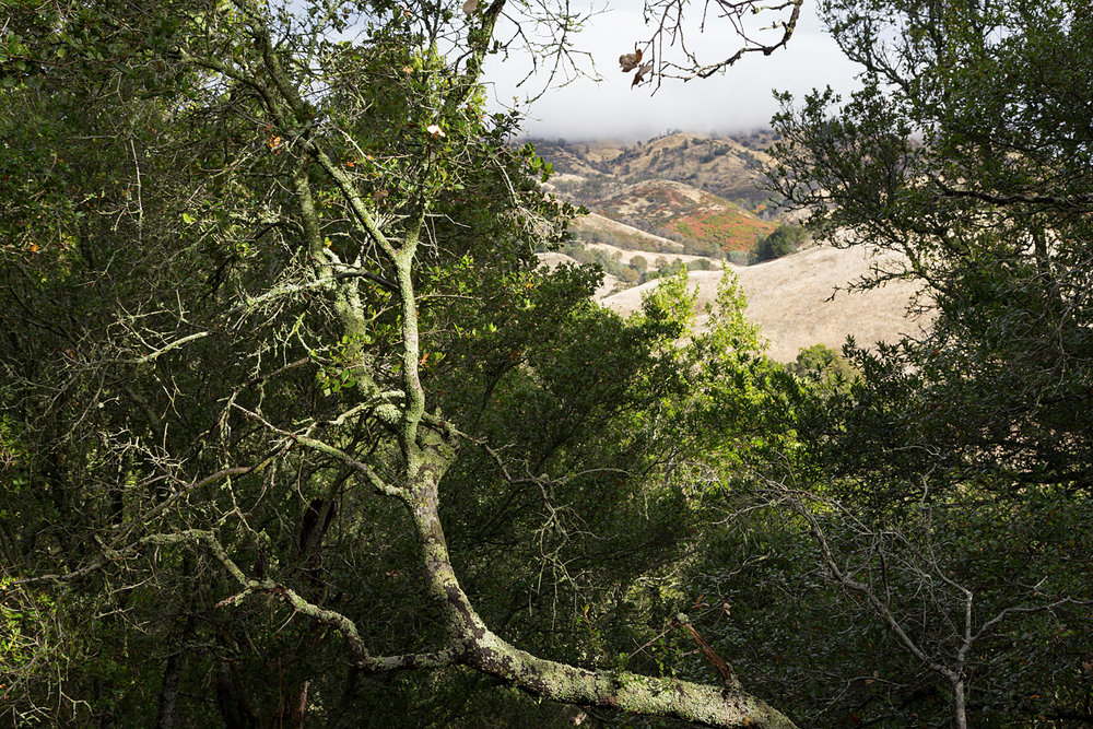 Mount Diablo State Park Curry Canyon Chase Pond Frog Pond-27.jpg