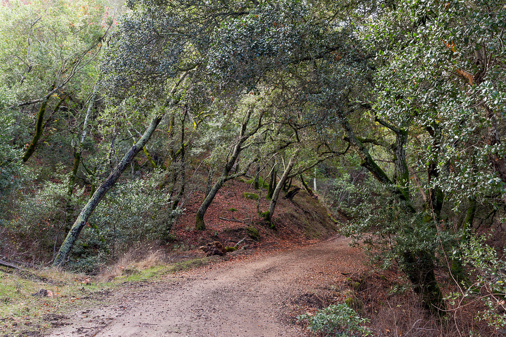 Mount Diablo State Park Curry Canyon Chase Pond Frog Pond-30.jpg