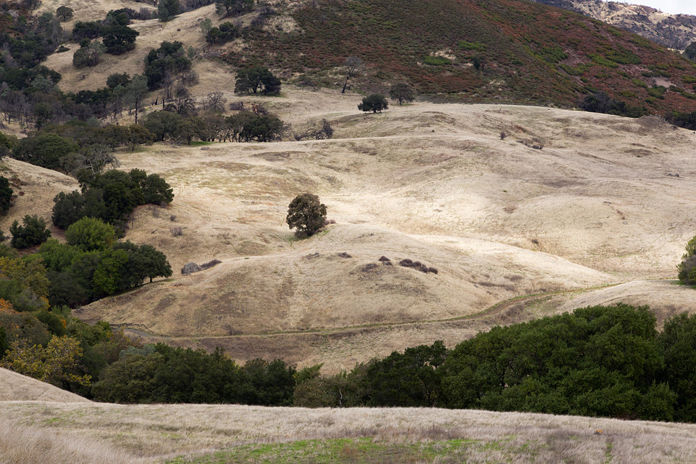 Mount Diablo State Park Curry Canyon Chase Pond Frog Pond-45.jpg