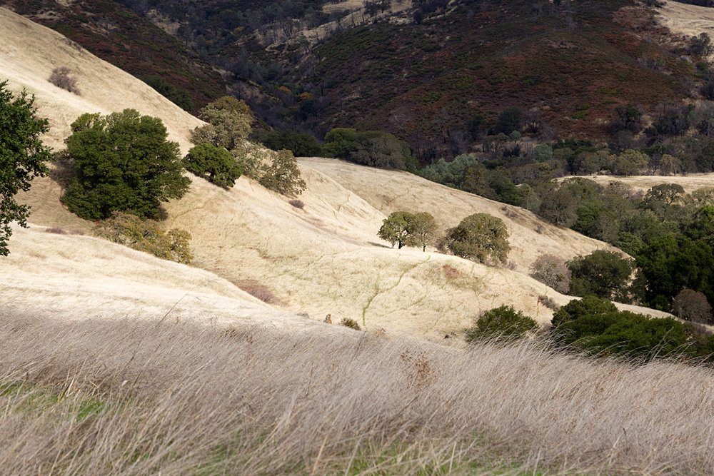 Mount Diablo State Park Curry Canyon Chase Pond Frog Pond-47.jpg