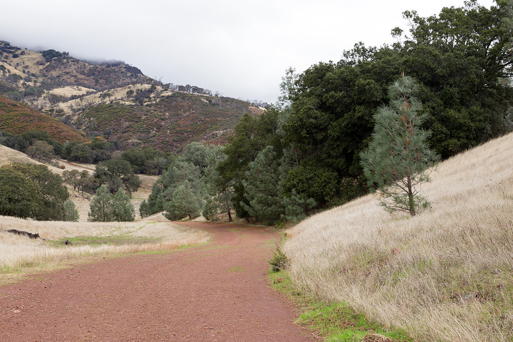 Mount Diablo State Park Curry Canyon Chase Pond Frog Pond.jpg