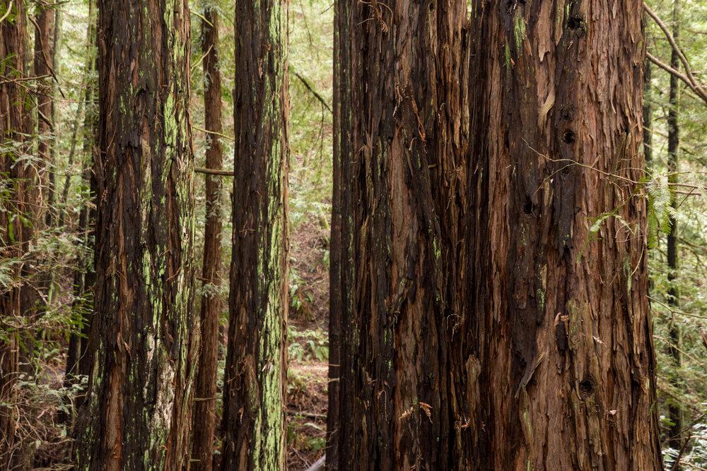 Redwood regional park french trail_-9.jpg