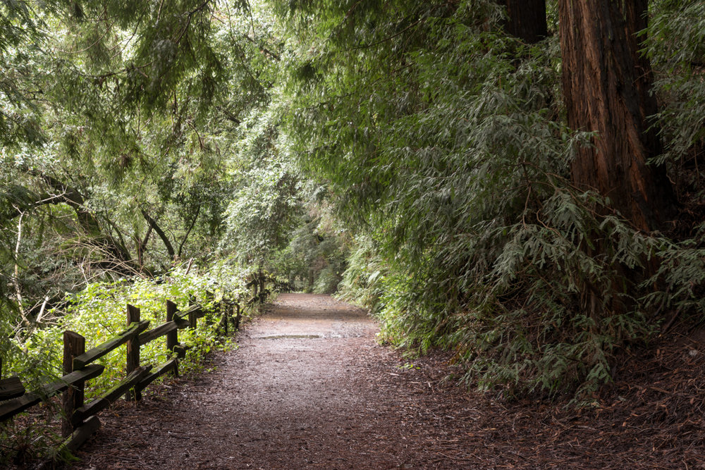 French Trail Loop - Redwood Regional Park