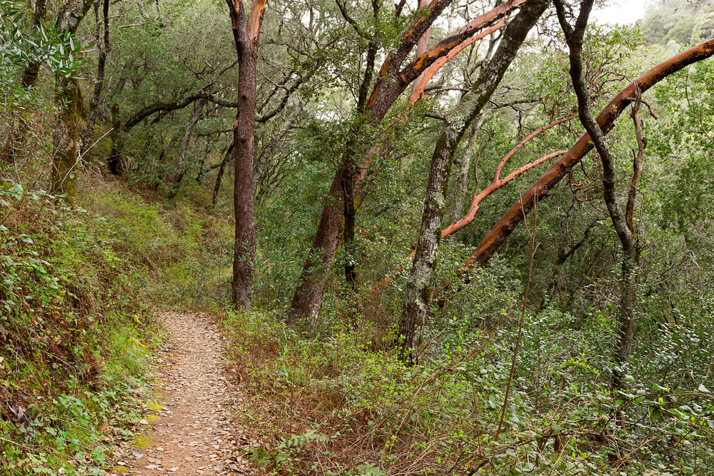 Madrone Canyon Sycamore Creek Trails-15.jpg