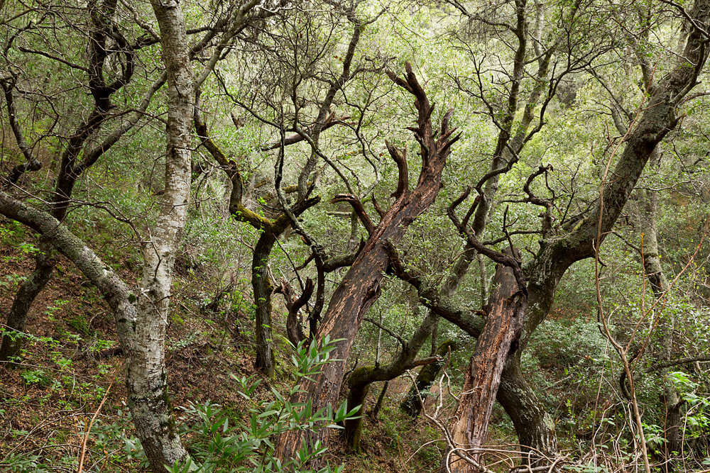 Madrone Canyon and Sycamore Creek - Mount Diablo State Park