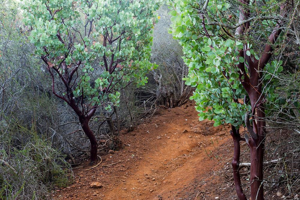 Eagle Peak Mount Diablo State park-3.jpg
