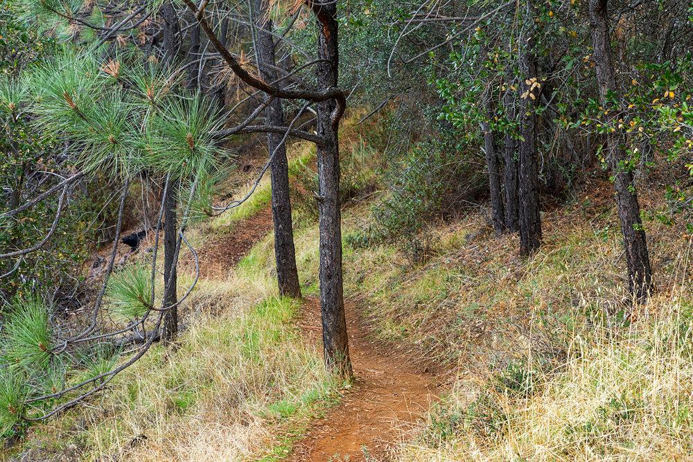Eagle Peak Mount Diablo State park-2.jpg