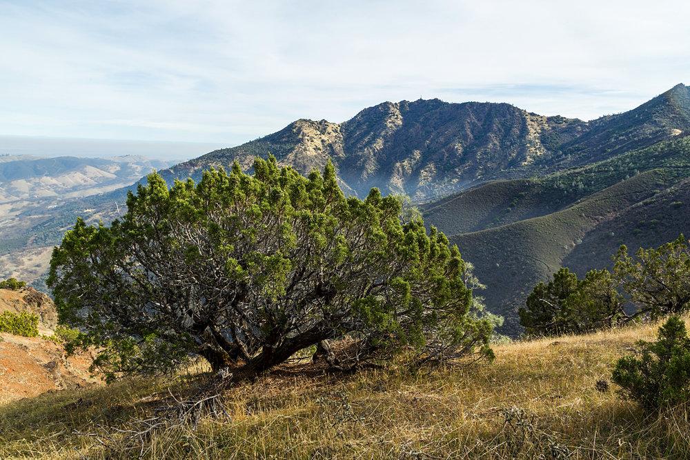 Eagle Peak Mount Diablo State park-23.jpg
