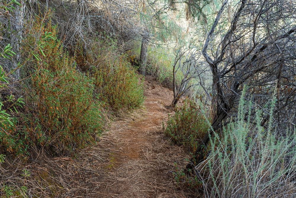 Eagle Peak Mount Diablo State park-26.jpg