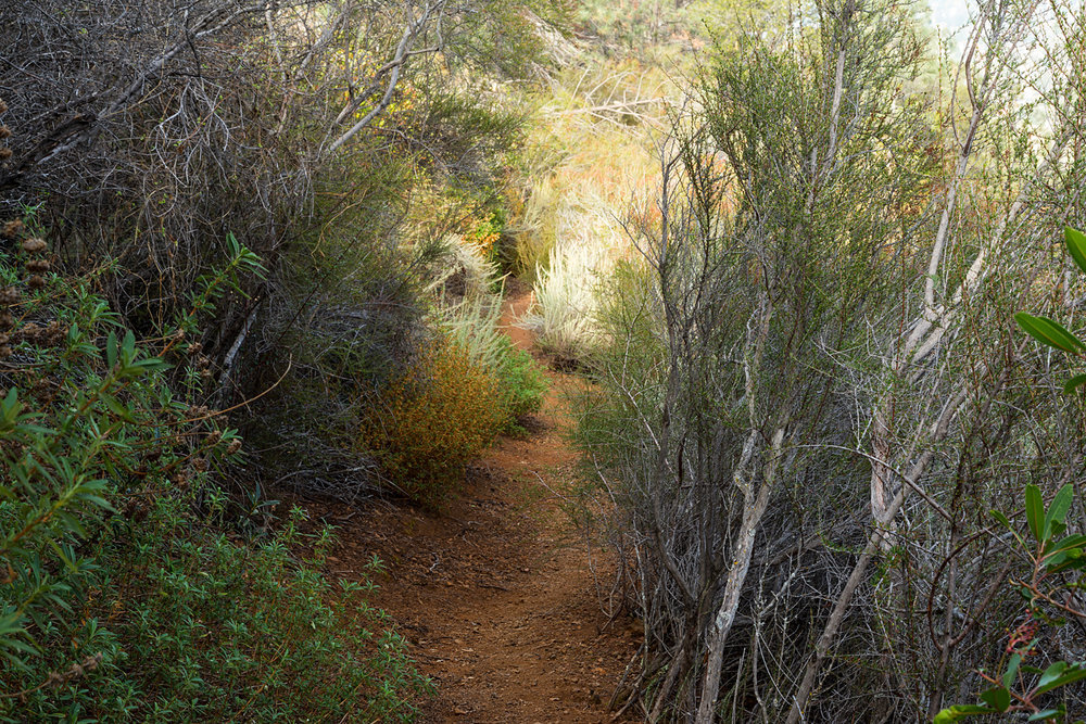 Eagle Peak Mount Diablo State park-28.jpg