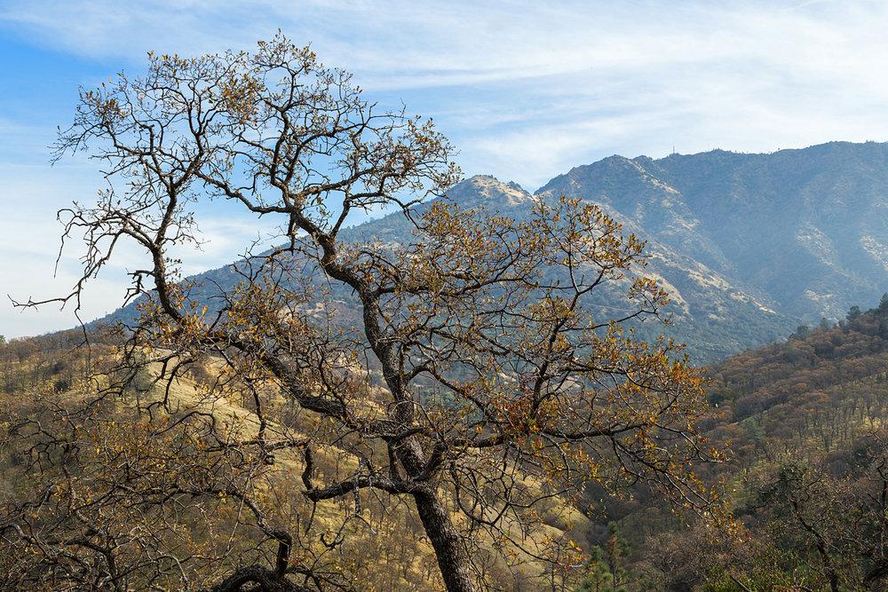 Eagle Peak Mount Diablo State park-29.jpg