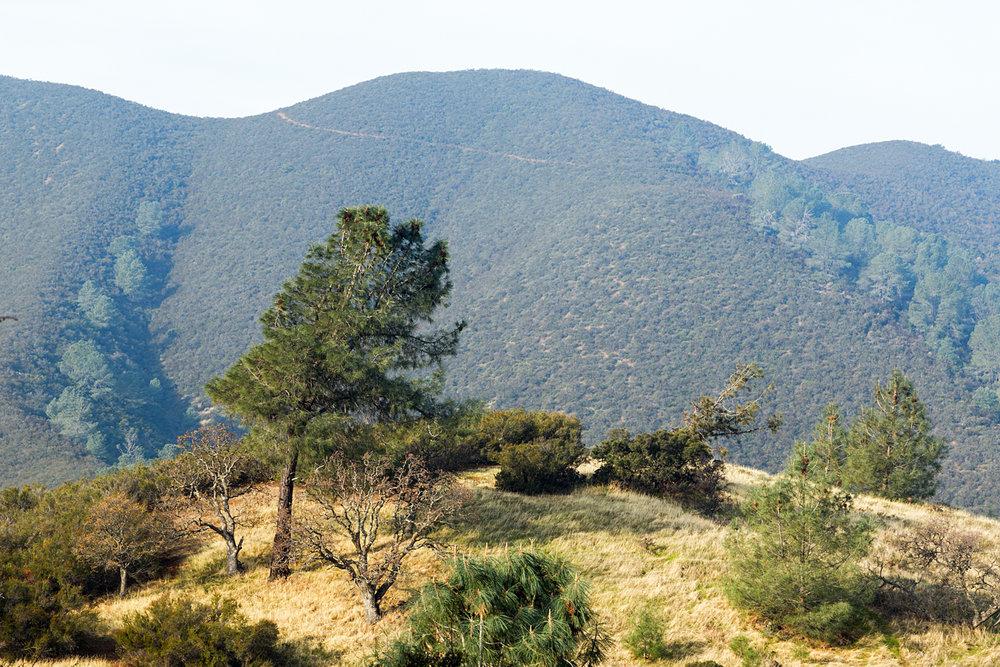 Eagle Peak Mount Diablo State park-38.jpg