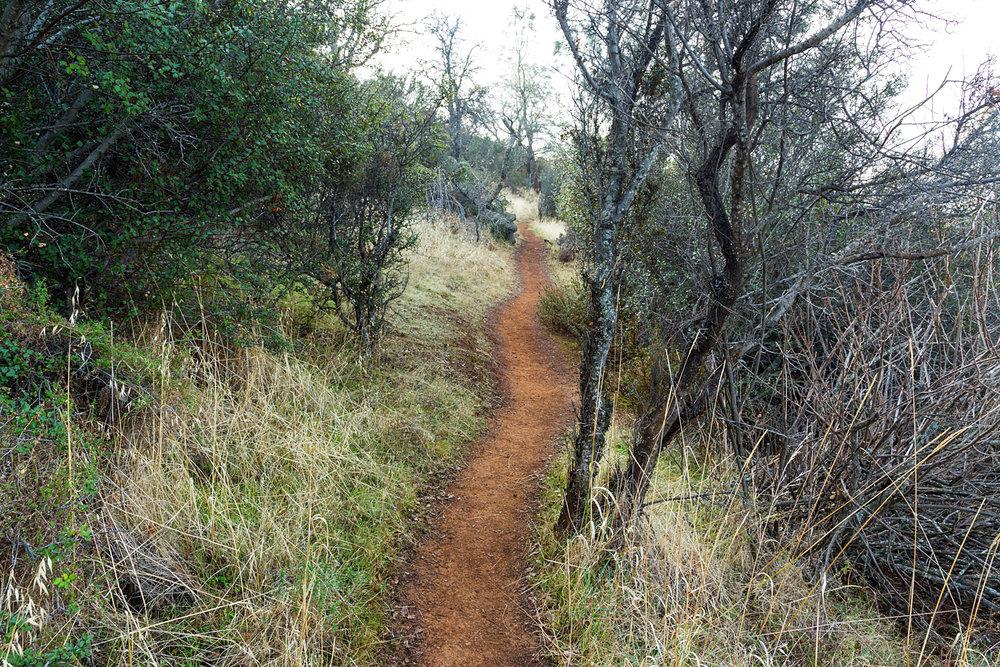 Eagle Peak Mount Diablo State park-39.jpg