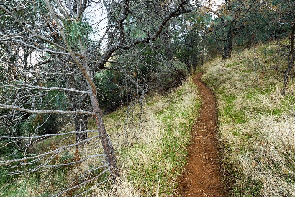Eagle Peak Mount Diablo State park-40.jpg