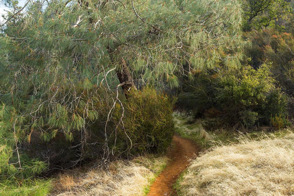 Eagle Peak Mount Diablo State park-43.jpg