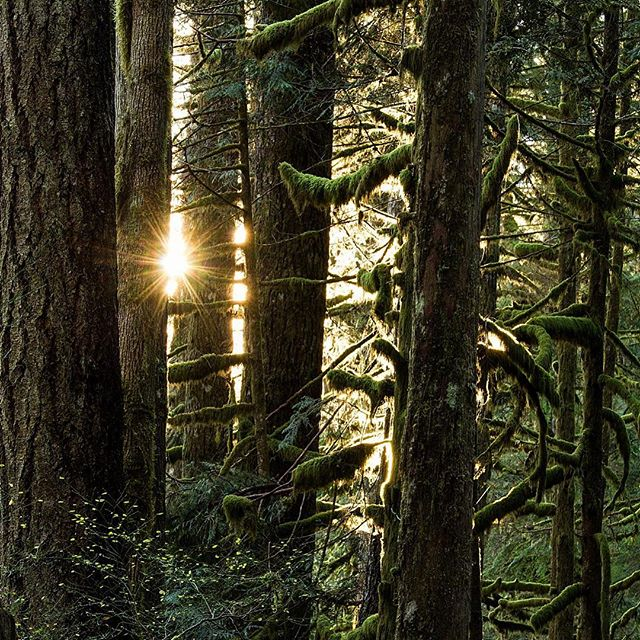 Sun through the trees on the Woody Trail in Wallace Falls State Park.  #trail #findyourtrail #sunrisehike #hikingwithmyson #forestbathing #relaxation #healthyhikes #statepark #washingtontrails #wallacefalls #mossy