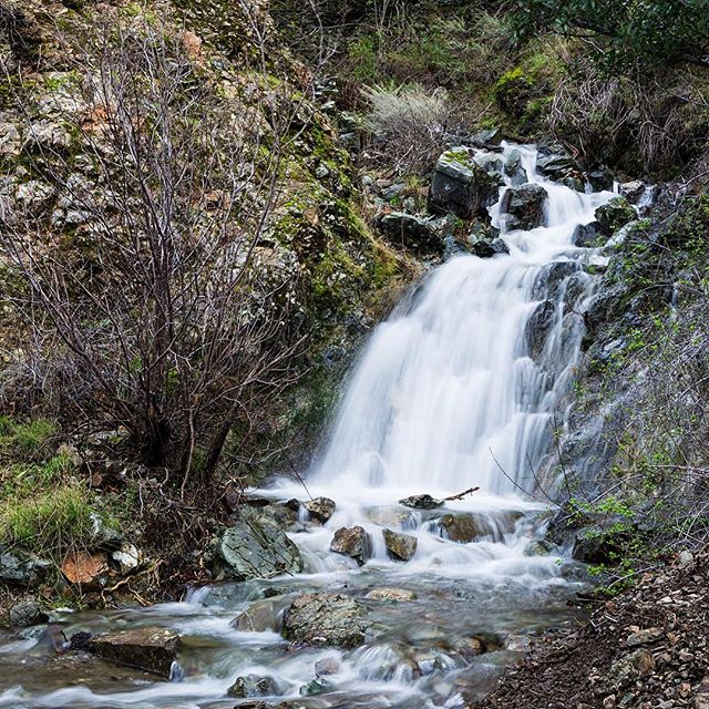 """After our recent """"Atmospheric river"""" the streams and falls in Mt Diablo State Park are raging and thunderous...it's a great time to see falls where they don't usually appear... View from the Falls Trail... #waterfalls #mtdiablo #winterhiking #statepark #findyourtrail #morninghike #hikingphotography #negativeions"""