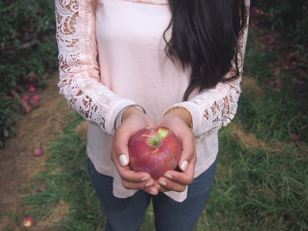 fun-fall-activities-new-england-apple-picking.JPG