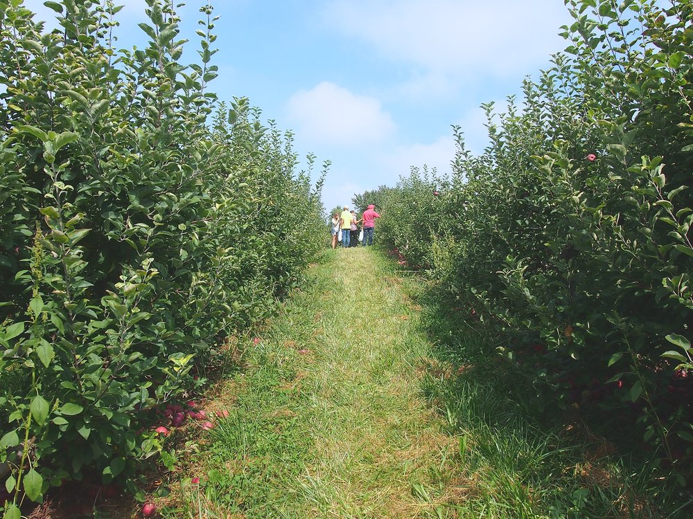 johnny-appleseed-farm-apple-picking