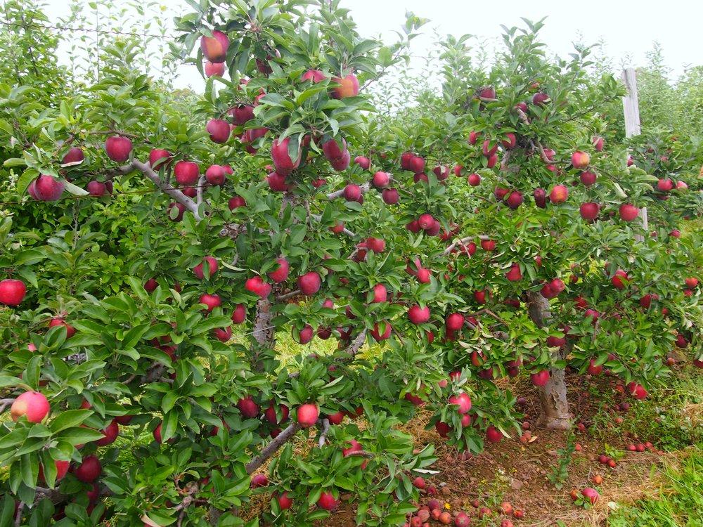 johnny-appleseed-farm-connecticut-fall-activity.jpg