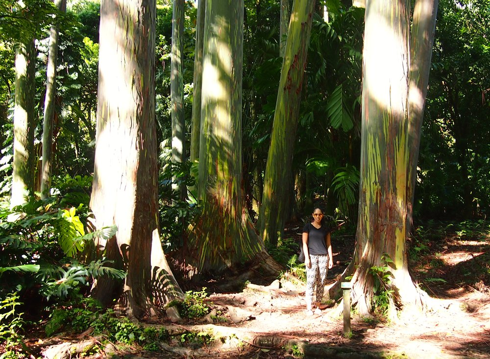 road-to-hana-rainbow-trees-one-week-maui-itinerary