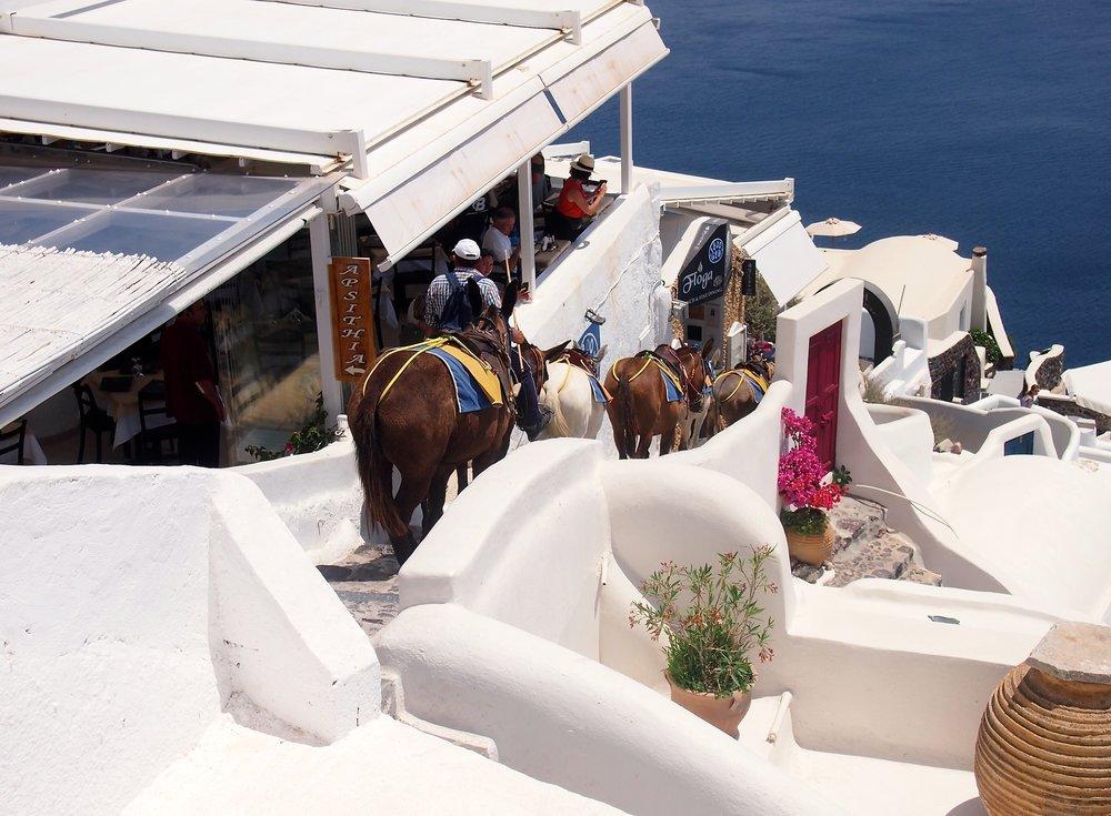 donkey-oia-santorini-greece.JPG