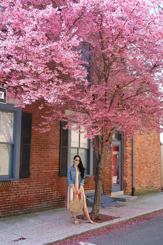 new-england-cherry-blossom-travel-blogger.jpg