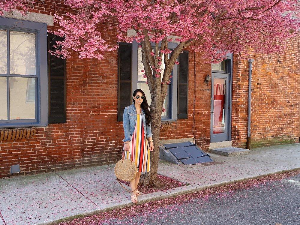 cherry-blossom-trees-philadelphia-fashion-blogger.JPG