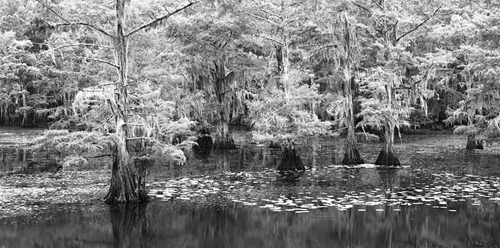 Cypress and Lily Pads v3 12 24.jpg