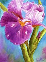 Iris 5x7 copy.jpg