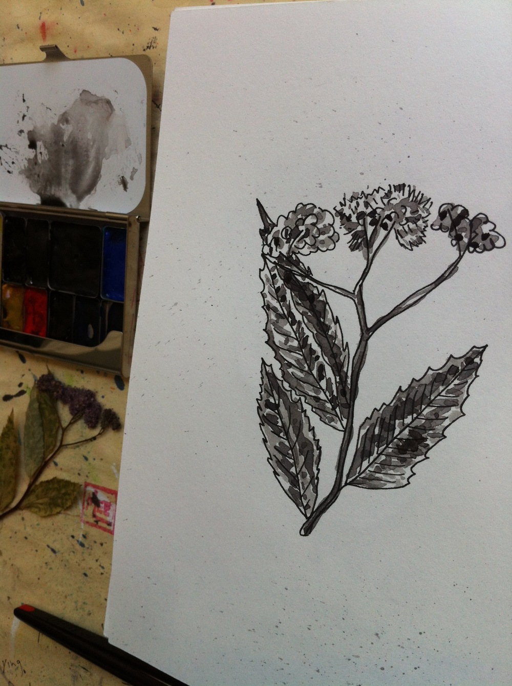 started out with painting a dried and pressed flower from the safety of my studio