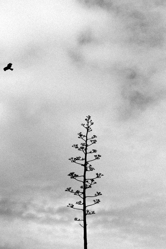 Hawk and Tree