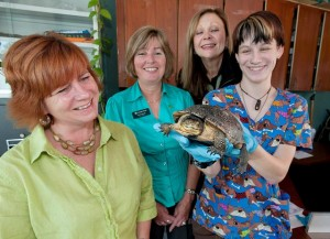 Photo from Kawartha Turtle Trauma Centre.