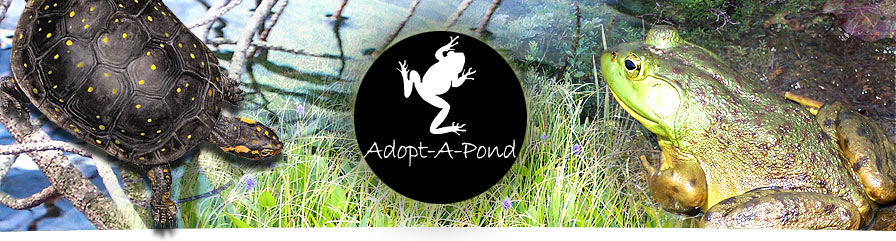 Image from:  http://www.torontozoo.com/adoptapond/