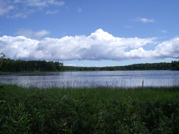 Long Marsh.jpg