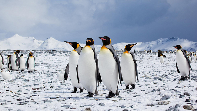 Image by Antarctica Bound | flickr.com