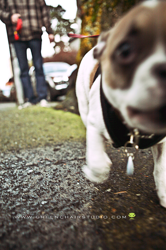 'french bulldog', 'frenchie', 'dog photography', 'portland'