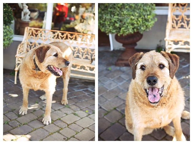 """carmel valley pet photography', ""carmel dog photos"", ""carmel valley dog photography"""