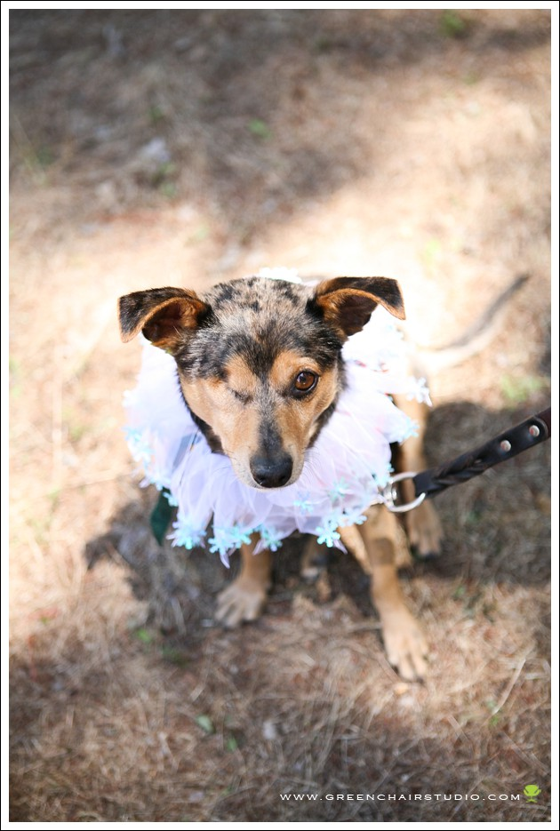 """SPCA Monterey County"", ""pet adoption photos dog"", ""dog adoption monterey county"", ""adoptable dogs monterey County SPCA"""