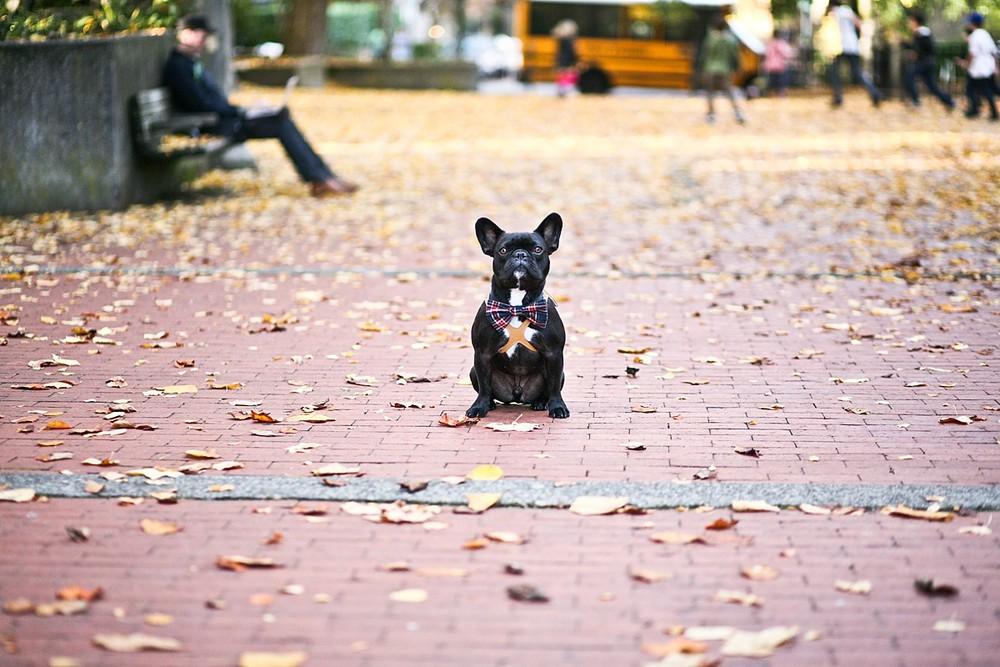 heavenmcarthur-pets-website_0008.jpg