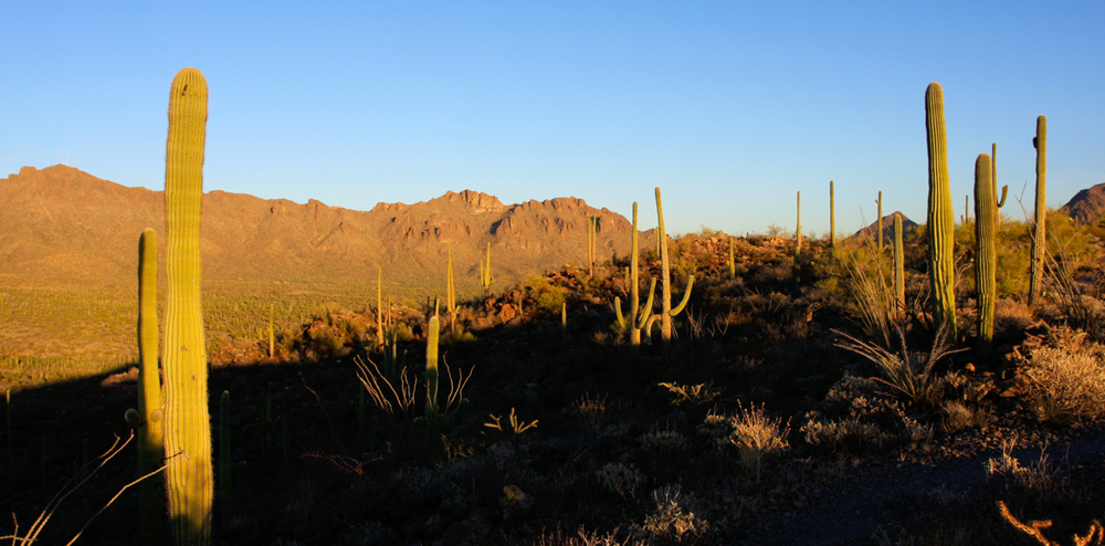Part of the the main spine of the Tucson Mountains, taken from Brown Mountain.  Antenna Peak is the pointed peak on the far left of the photo.