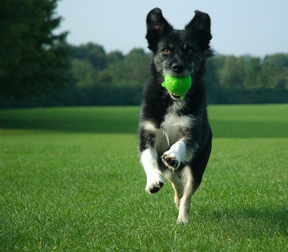dog-running-with-ball.jpg