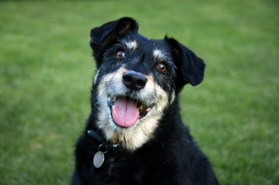 black dog used inFB Ad with collar.jpg